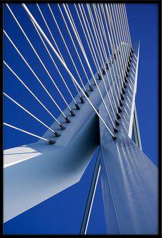 The Swan by ** Maurice **, via Flickr; The Erasmusbrug Bridge, Rotterdam, Netherlands