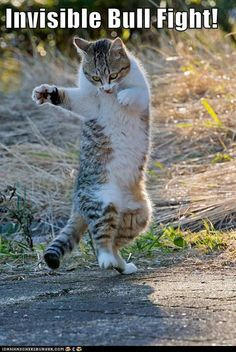I love invisible cat memes.