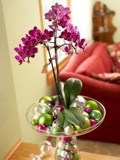 topfpflanzen zimmerpflanzen blühend orchidee weihnachtsdeko