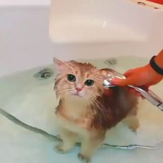 Animals Discover Kitty bath time Cool Cat Tree House Вот бы моему коту так л - Hunde und Katzen Cool Cat Trees Cool Cats I Love Cats Cute Funny Animals Cute Baby Animals Funny Cats Happy Animals Funny Humor Cute Cats And Kittens Cute Funny Animals, Cute Baby Animals, Animals And Pets, Funny Cats, Happy Animals, Animals Images, Cool Cat Trees, Cool Cats, Cute Cats And Kittens