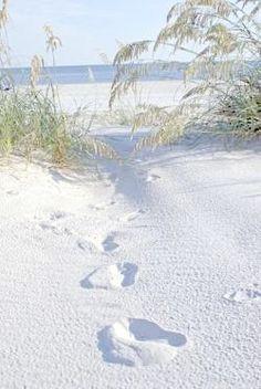 If you enjoy birds and beautiful beaches, you will love Dauphin Island, Alabama! Sunset Beach, Ocean Beach, Beach Day, Hawaii Beach, Sand Beach, Oahu Hawaii, Dauphin Island, I Love The Beach, Foto Art