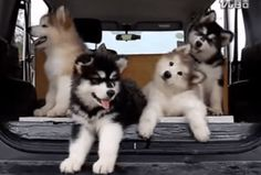 cuteness overload!  Puppies listening to music and doing that adorable head tilt.