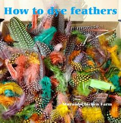 dye feathers easy cheap