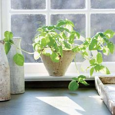4 Easy Herbs to Grow for an Indoor Garden - Food Gardens - Natural Home & Garden