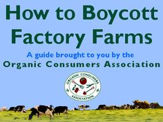 99% of all meat, eggs and dairy products produced today in the U.S. come from Factory Farms. That makes it tough—but not impossible—to avoid buying those products. Learn how you can avoid factory-farmed food!
