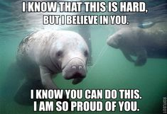 Because who doesn't love encouragement from a manatee???