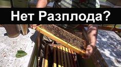 пчеловодство для начинающих - Нет матки, нет Разплода - Что делать? Bee House, Videos, Honey, Youtube, Video Clip, Youtube Movies