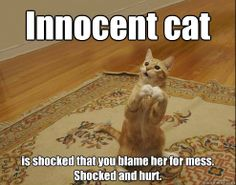 Innocent cat is shocked that you blame her for mess. Shocked and hurt.  Innocent cat