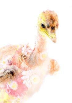 ceremony-ostrich, 植松琢麿 Takuma Uematsu, 2008。ceremony系列我都好喜歡,但看到ceremony,腦海就會響起new order的前奏旋律...