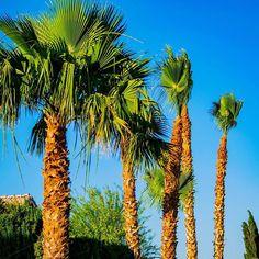 What's your favorite landscape view? #Palmtrees #LasVegas #Vegas #summer