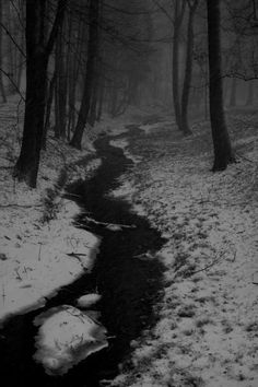snow beauty winter cold Black and White beautiful white vintage trees black mirror dark nature travel forest retro escape free darkness wild fade deer fog Dawn haze tall antlers dusk hazy 3d Fantasy, Dark Photography, Winter Wonder, Winter Scenes, Yule, Dark Art, Mists, Cool Pictures, Scenery