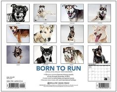 Born to Run 2015 Calendar