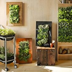 diy wooden frames with containers for plants