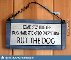Dog owners will know. I know and I hate the fact!