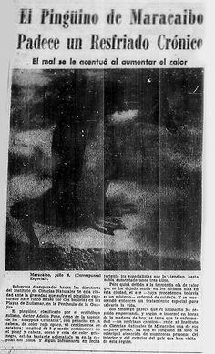 Pingüino de Maracaibo sufrió de un resfriado. Publicado el 6 de julio de 1955.