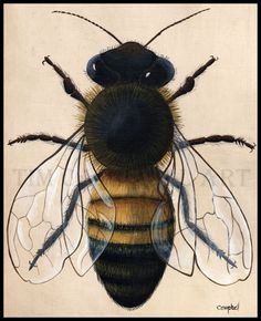 Honey Bee by Tim Campbell by TimCampbellArt on Etsy