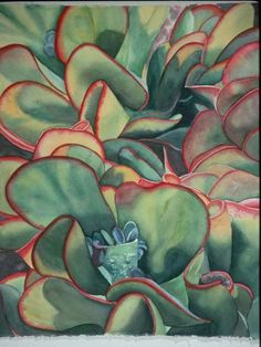 succulents pictures - Bing Images