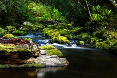 New Zealand - Naturally - This stream flows from thew Te Urawhera National Park in New Zealand into Lake Waikaremoana. A pristine, untouched part of New Zealand and has in abundance New Zealand Natives of both flora and fauna growing. Distinctly New Zealand