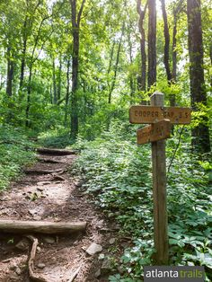 Hike the Appalachian Trail from Hightower Gap to Cooper Gap through rolling North Georgia forest