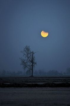 =talk about what this communicates to you=  Lonely moon by ste.it, via Flickr