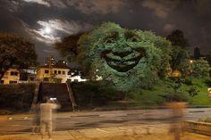 Iniciativa que passa hoje pelo Minhocão projeta expressões faciais sobre árvores para conscientizar população sobre as mudanças climáticas.