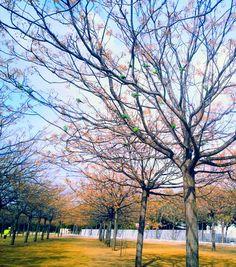 Loros en el Parque de Miraflores. Sevilla