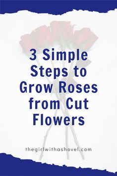 Here's my own tested-and-true method that will teach you how to grow rose bushes from cut flowers! Yes, success rates are low, but follow these steps and you will have the highest chances of success! House Plants Decor, Plant Decor, Apartment Plants, Best Indoor Plants, Rose Bush, Low Lights, Plant Care, Cut Flowers, Houseplants