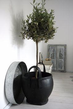 bomen voor in huiskamer - Google Search