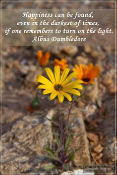 Photo by: Coreen Kuhn Quote by: Albus Dumbledore Location: Springbok, Northern Cape, South Africa #coreenkuhnphotography #travelphotography #flowerphotography #inspirational #springbok