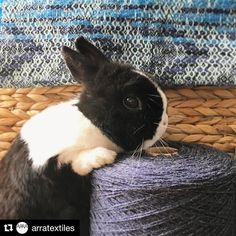 I just had to share this post by @arratextiles . Simply the best and cutest Eastergram ever!!! Go check out her feed for beautiful hand woven textiles. . . . #weaving #woven #textiles #yarn #cutebunny #bunny #rabbit #easter #repost #arratextiles #eastergram #babybunny #babyrabbit #