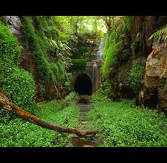Helensburgh Abandoned Train Tunnel Landscape in Australia - 1001 Gardens Abandoned Train, Abandoned Buildings, Abandoned Places, Australia Landscape, Train Tunnel, Australia Travel Guide, Australia Animals, Old Trains, Happy Trails