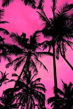 Palms #pink #hot #summer