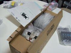 Cat in a box #Cute