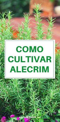 Organic Mulch, Organic Farming, Organic Gardening, Balcony Garden, Herb Garden, Home And Garden, Radio Garden, Grow Home, Plantas Bonsai