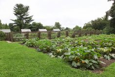 Moving the vegetable garden to this new location has proved to be a success.  We've had wonderful produce all summer long and will continue ...