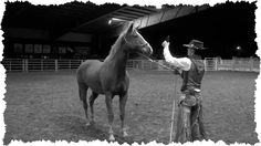 How to Cure a Head Shy Horse Carson James