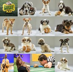 Puppy Bowl 2016 and the Florida Little Dog Rescue pawticipants!