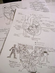 #Anatomical #studying #diagrams #heart #anatomy #medicine