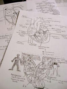 #Anatomical #studying #diagrams #heart #anatomy #medicine