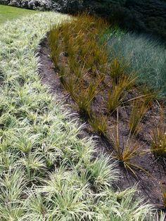 Grasses sea wall