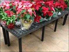 Xmas Poinsettia Dunnage Rack – Fixtures Close Up Christmas Poinsettia, Christmas Flowers, Xmas, Merchandising Ideas, Hanukkah, Retail, Backyard, Plants, Patio
