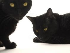 """Pin 15. 