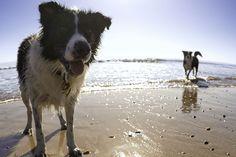 Urlaub mit Hund: Die schönsten Hundestrände an Nord- und Ostsee - TRAVELBOOK.de