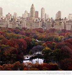 #Fall in #CentralPark #NY