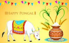 Pongal Festival is most important festival for people belonging to Tamil Nadu region. Pongal is a four days festival celebrated in Tamil Nadu State: Bhogi Festival: January Surya Pongal: January Mattu Pongal: January Kaanum Pongal: January 2011 Hd Wallpaper Quotes, Love Wallpaper, Geometric Wallpaper, Car Wallpapers, Wishes Messages, Wishes Images, Sankranthi Wishes, Happy Makar Sankranti Images, Pongal Images