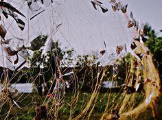 """Юрий Ермоленко, лэнд-арт проект """"ЭНТОМОЛОГИЯ ДУШ""""(""""Десятая ветроспекция"""". Лэнд-арт фестиваль """"Весенний ветер - 2005, Остров Ветра, Киев, Украина) #юрийермоленко #ЮрийЕрмоленко #YuryErmolenko #yuryermolenko #юрийермоленкохудожник #yuryermolenkoartist #мистецтво #сучаснемистецтво #landart #art #contemporaryart #modernart #fineart #искусство #энтомология #философия #лэндарт #инсталляция #сеть #вечность #портрет #фотография #бабочка #мотылек #душа #души #butterfly #остров #метелик #souls #сетка"""