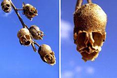 La flor evolucionó con un sólo objetivo primordial para atraer a los polinizadores como los insectos o pájaros. La función de las flores además de su color