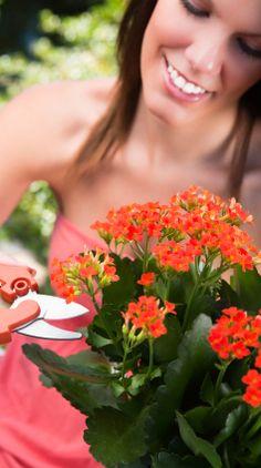 Kalanchoe pielęgnacja Blond, Potted Plants, Garden, Floral, Flowers, Room, Women, Love, Pot Plants