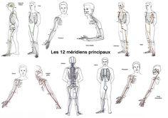 Les 12 méridens - Bien être, santé, relaxation, massage, stress, shiatsu, Qi Qong; phytothérapie, remède de grand-mère