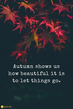 Autumn shows us how beautiful it is to let things go. Autumn shows us how beautiful it is to let things go. Positive Quotes, Motivational Quotes, Inspirational Quotes, Leaf Quotes, Season Quotes, Nature Quotes, Quotes About Autumn, Autumn Quotes And Sayings, Happy Fall Y'all